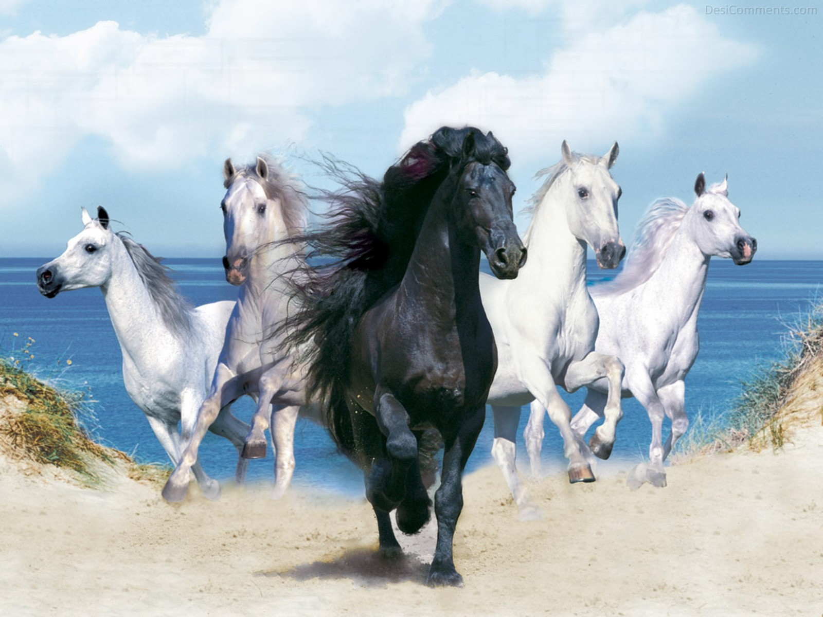 Black Horse With White Horses Desicomments Com