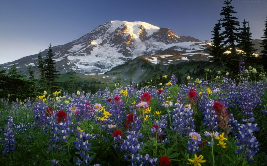 Mountains and flowers