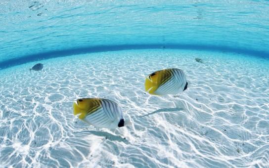 Wonderful Ocean Wallpaper