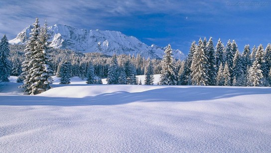 Wonderful Winter Picture