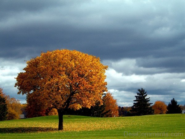 Clouds And Tree