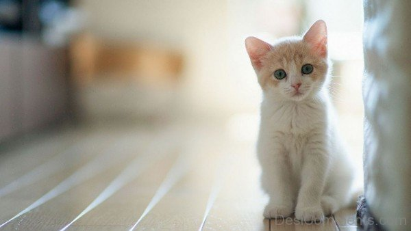 Cute Kitten Wallpaper-DC10008