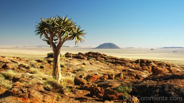 Desert Namibia Wallpaper-DC1231