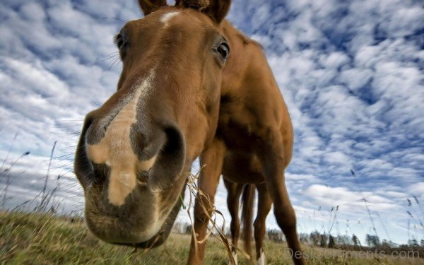 Funny Horse-DC10233