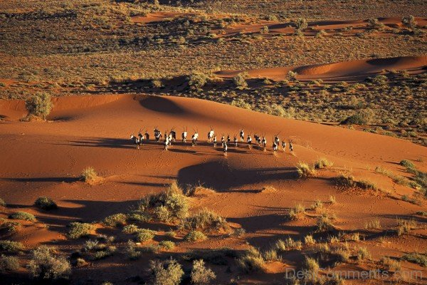 Kalahari Desert And Animals-DC1219