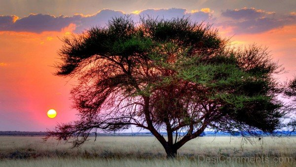 Kalahari Desert And Sun Set-DC1220
