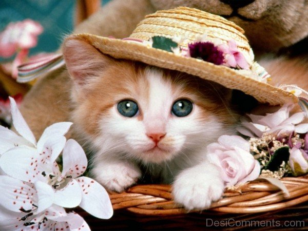 Kitten Wearing Hat-DC10370