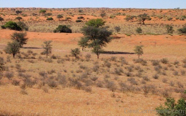 Wallpaper Of  Kalahari Desert-DC1214
