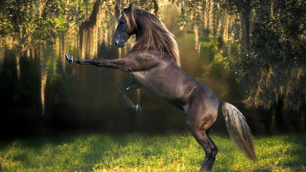 island mountain horse wallpaper - photo #14