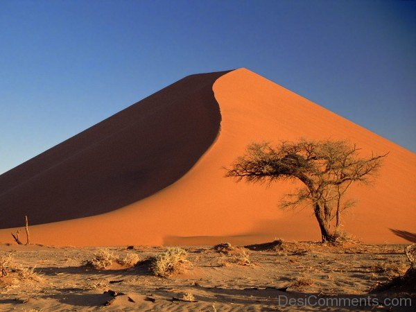 World Africa Sand dunes and Acacia Tree-DC1210
