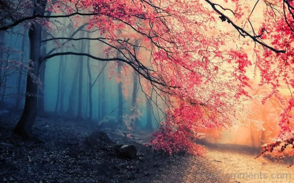 Amazing Wallpaper Of Red Leaf Trees