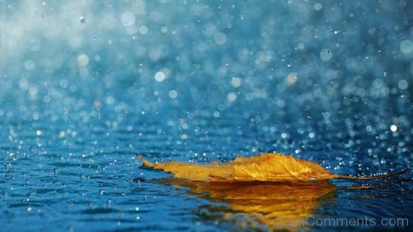 Wallpaper Of .Leaf And Rain