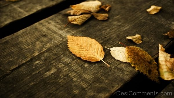 Wallpaper Of Autumn Leafs