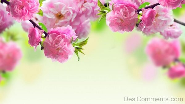 Wallpaper Of Pink Flowers