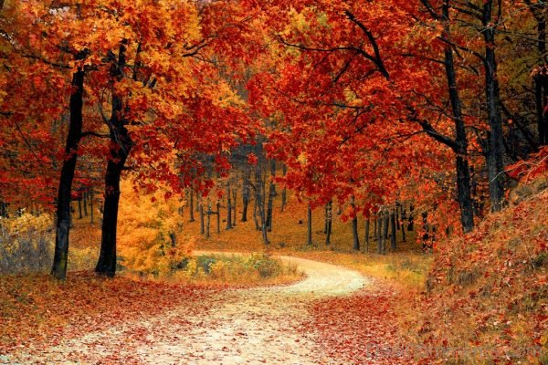Wallpaper Of Red Leaf Trees