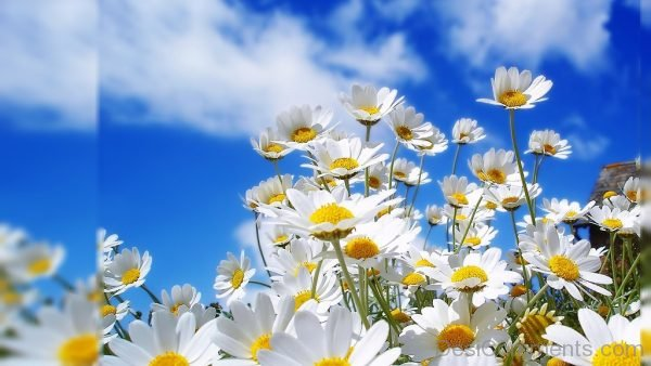 Wallpaper Of White Flowers