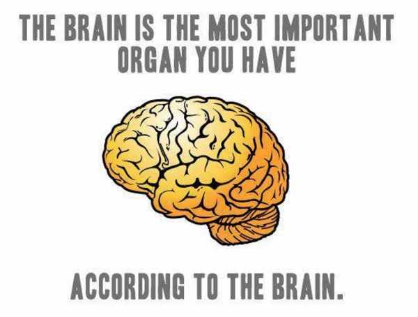 According To The Brain