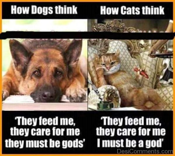 How Dogs Think And Cats Think-DC066