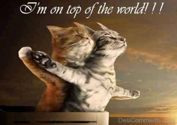 Picture: I'm On Top Of The World