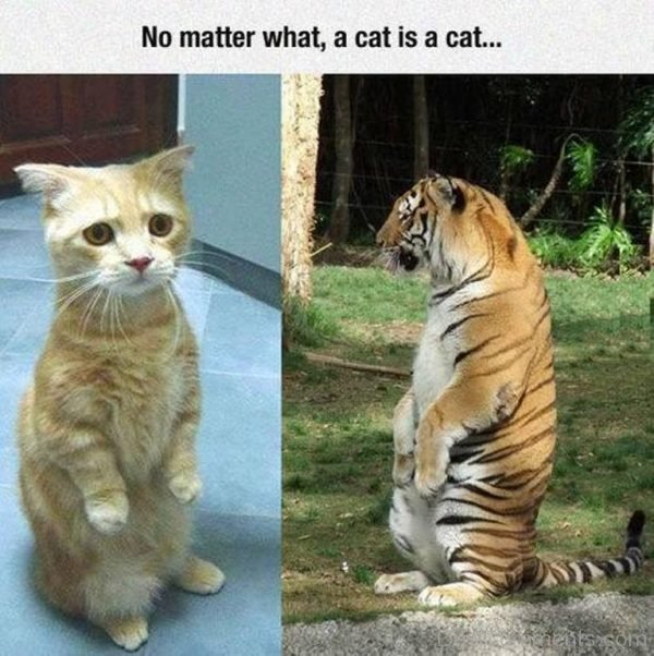 Picture: No Matter What, A Cat Is A Cat