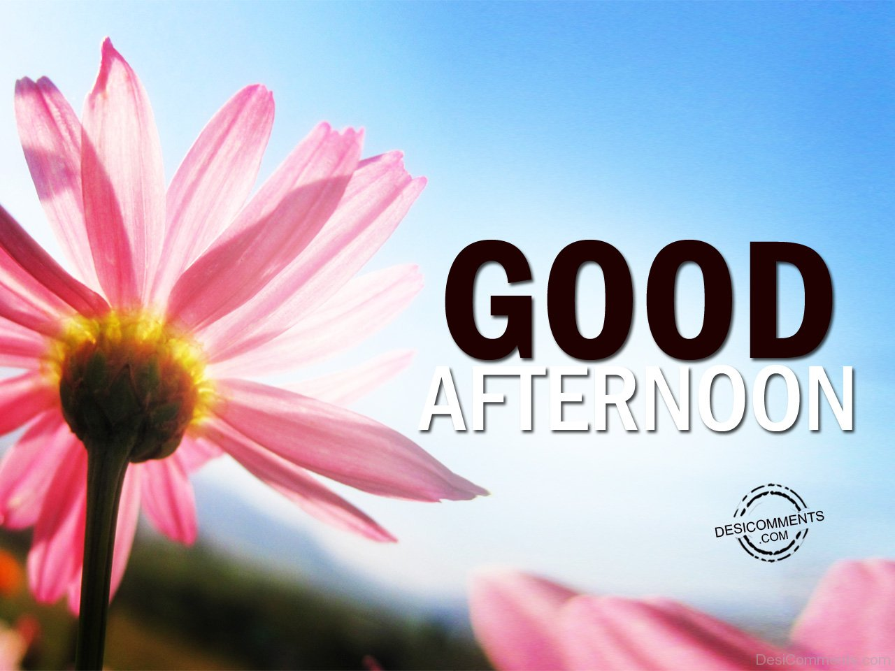 good afternoon pictures images graphics for facebook