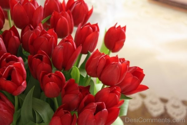 Amazing Red Tulip Flowers Pic
