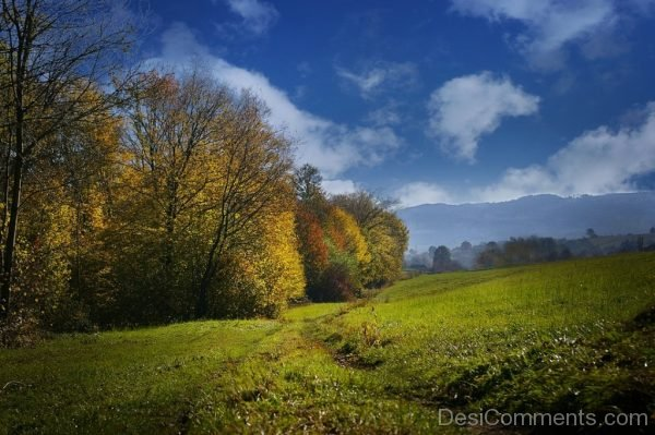 Autumn View Colors The Prospect Of Meadow