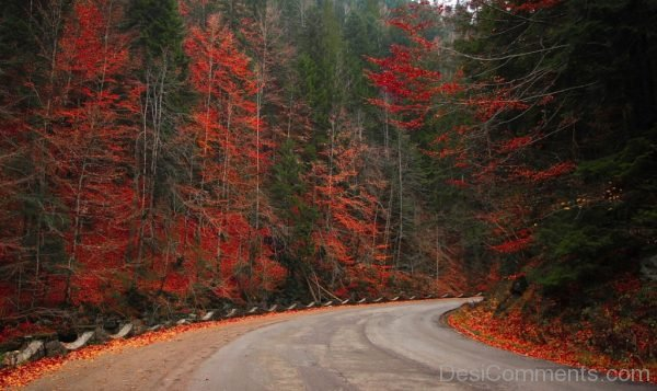 Autumn Woods Forest Road Nature Fall Landscape