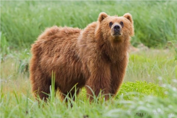 Picture: Bear