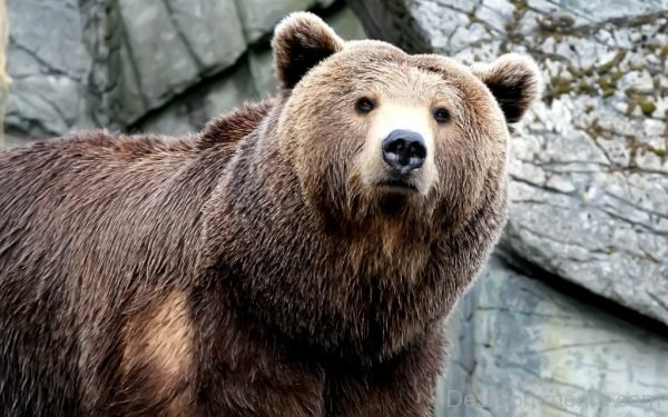 Picture: Bear Photo