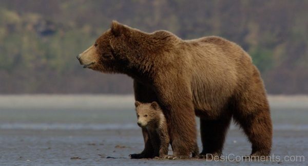 Picture: Bear Pic
