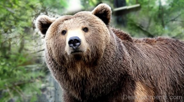 Picture: Bear Picture
