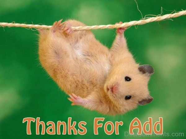 Beautiful Pic Of Thanks For Add