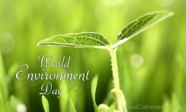 Brilliant Pic Of World Environment Day