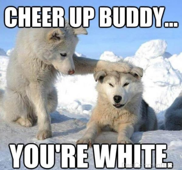 Cheer Up Buddy You Are White
