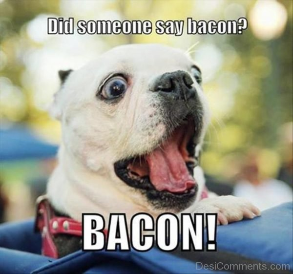 Did Someone Say Bacon