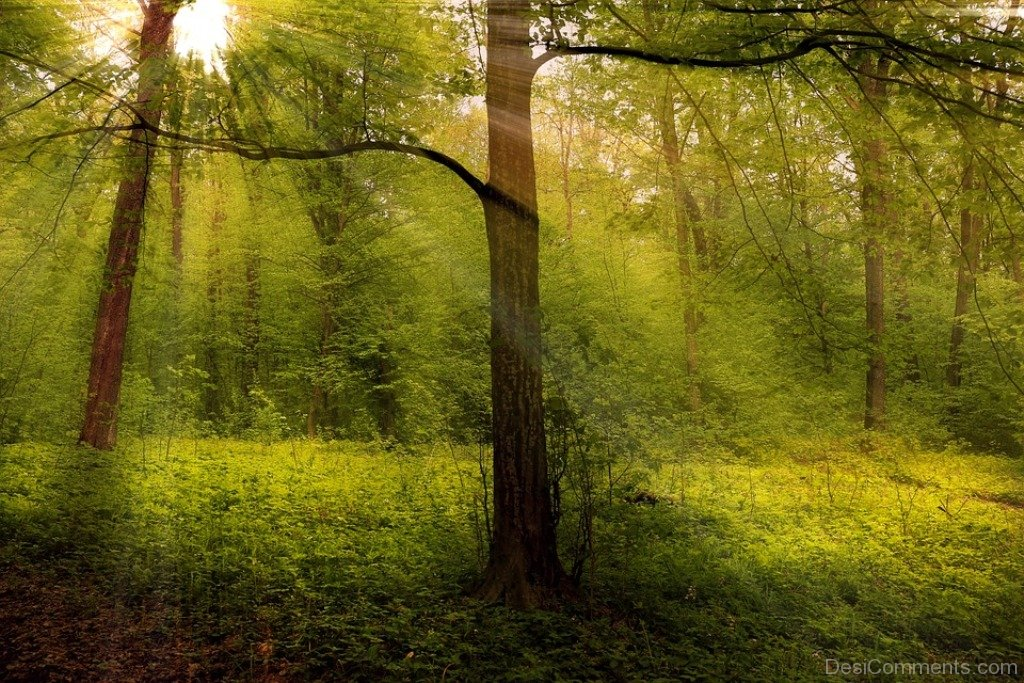 nature forest woods - photo #10