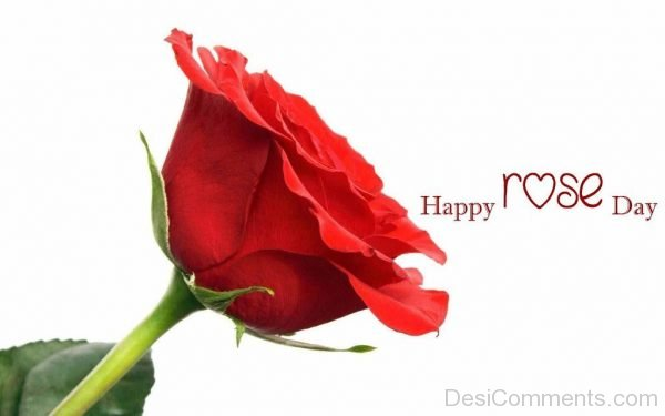 Happy Rose Day Lovely Image