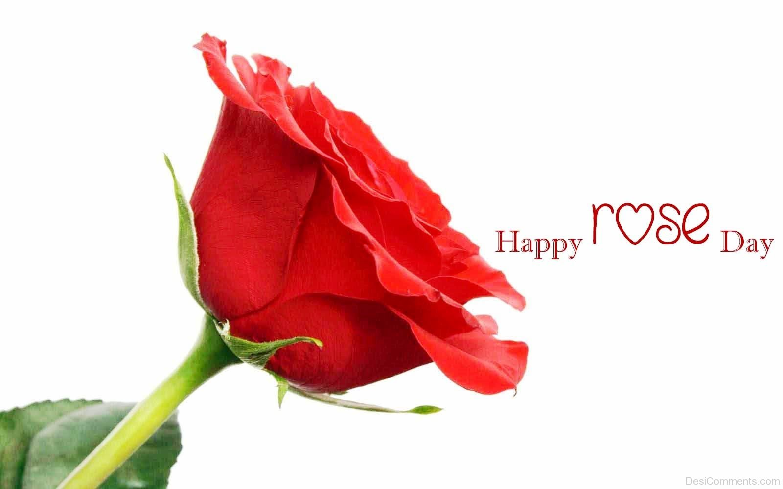 Happy Rose Day Nice Picture Desicomments