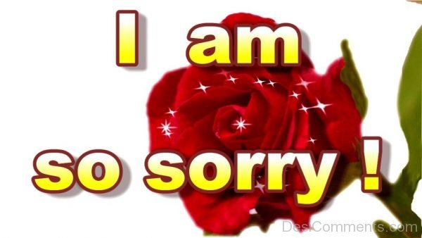 Picture: I Am Sorry !