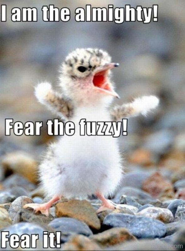 I Am The Almighty Fear The Fuzzy