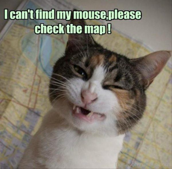 I Cant Find My Mouse Please Check The Map
