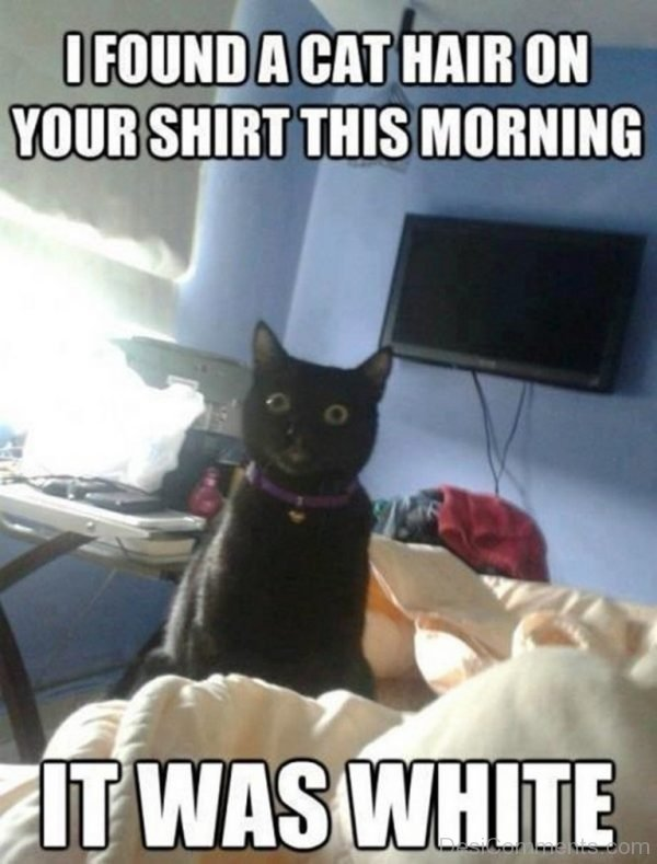 I Found A Cat Hair On Your Shirt This Morning