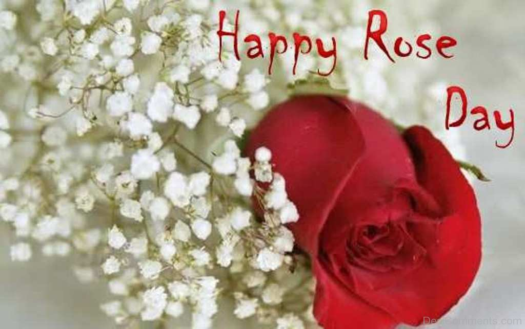 Rose Day Pictures Images Graphics Page 7