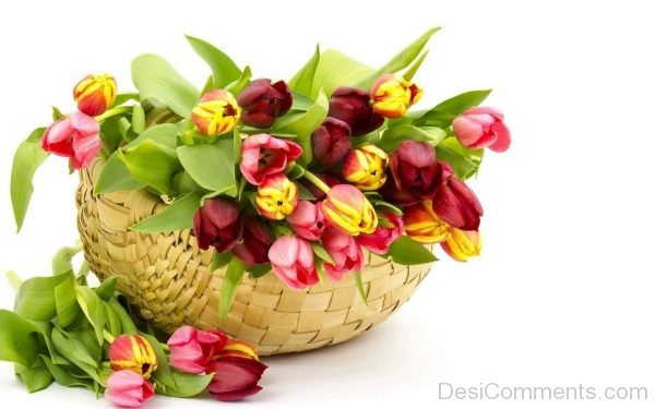 Picture: Image Of Tulip Flowers