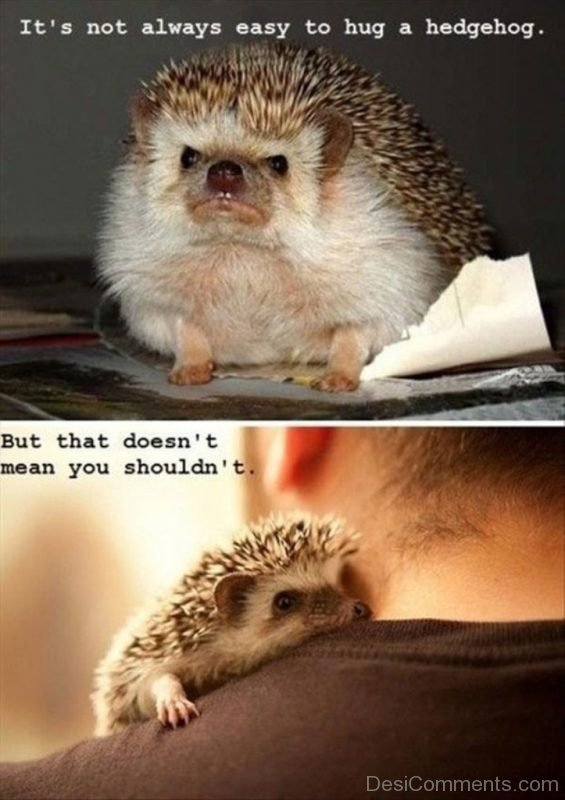 It's Not Always Easy To A Hug A Hedgehog