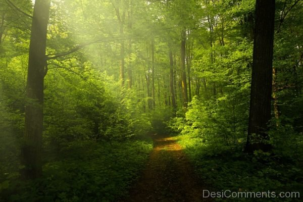 Light Forest Rays Landscape Forest