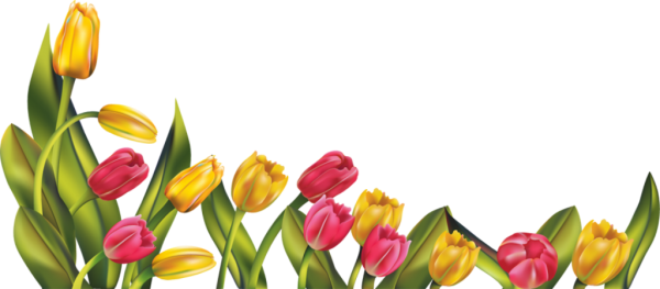 Lovely Tulip Flowers Image