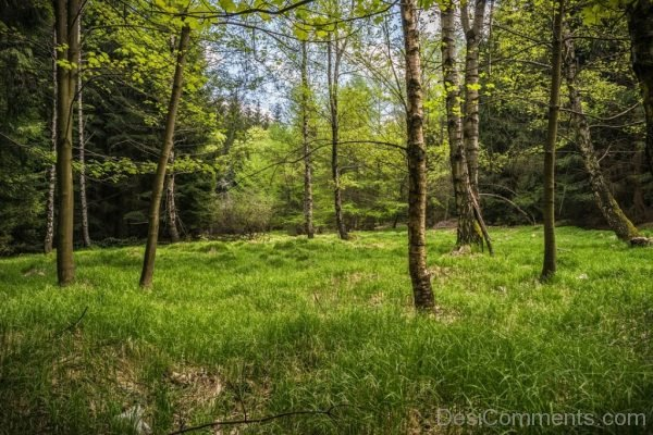 Meadow Glade Forest Spring