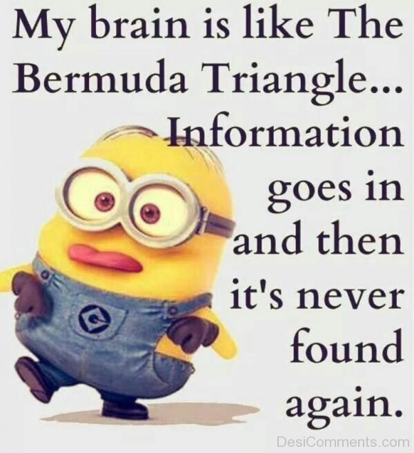 My Brain Is Like The Bermuda Triangle